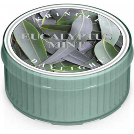 Kringle Candle Świeca zapachowa: Eukaliptus i mięta (Eucalyptus Mint)